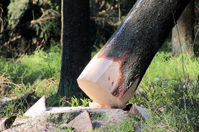 Výhody, ktoré poskytuje drevodom