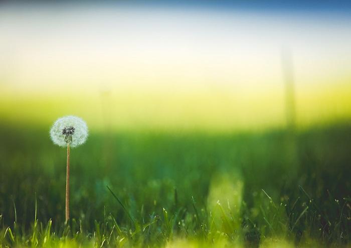 Ako založiť trávnik aby bol čo najkrajší?